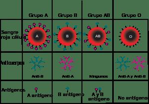 El grupo sanguíneo influye en la fijación del pigmento