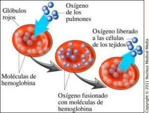 grupo sanguíneo en la micropigmentación - Centros Mar Díaz